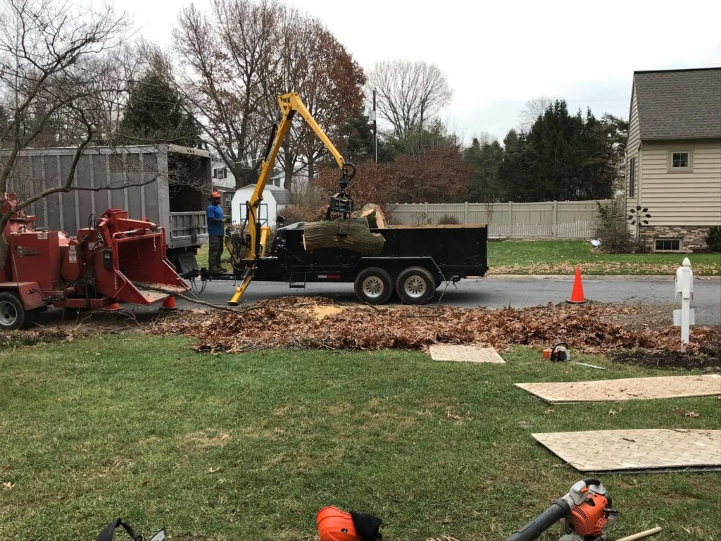 removing tree and stump and other debris