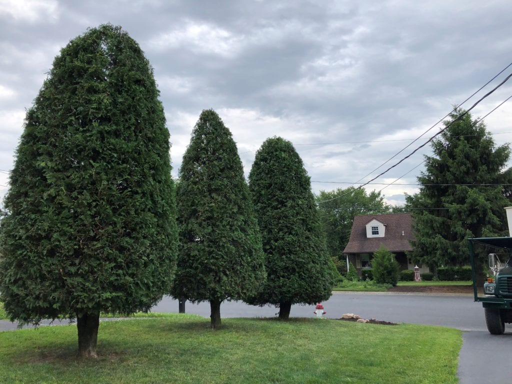 trees that have been pruned back and shaped