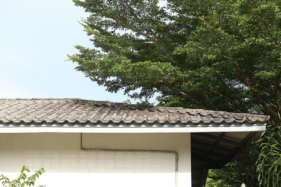 tree canopy almost touching roof of house