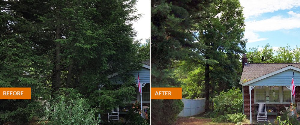 trees removed before/after photo