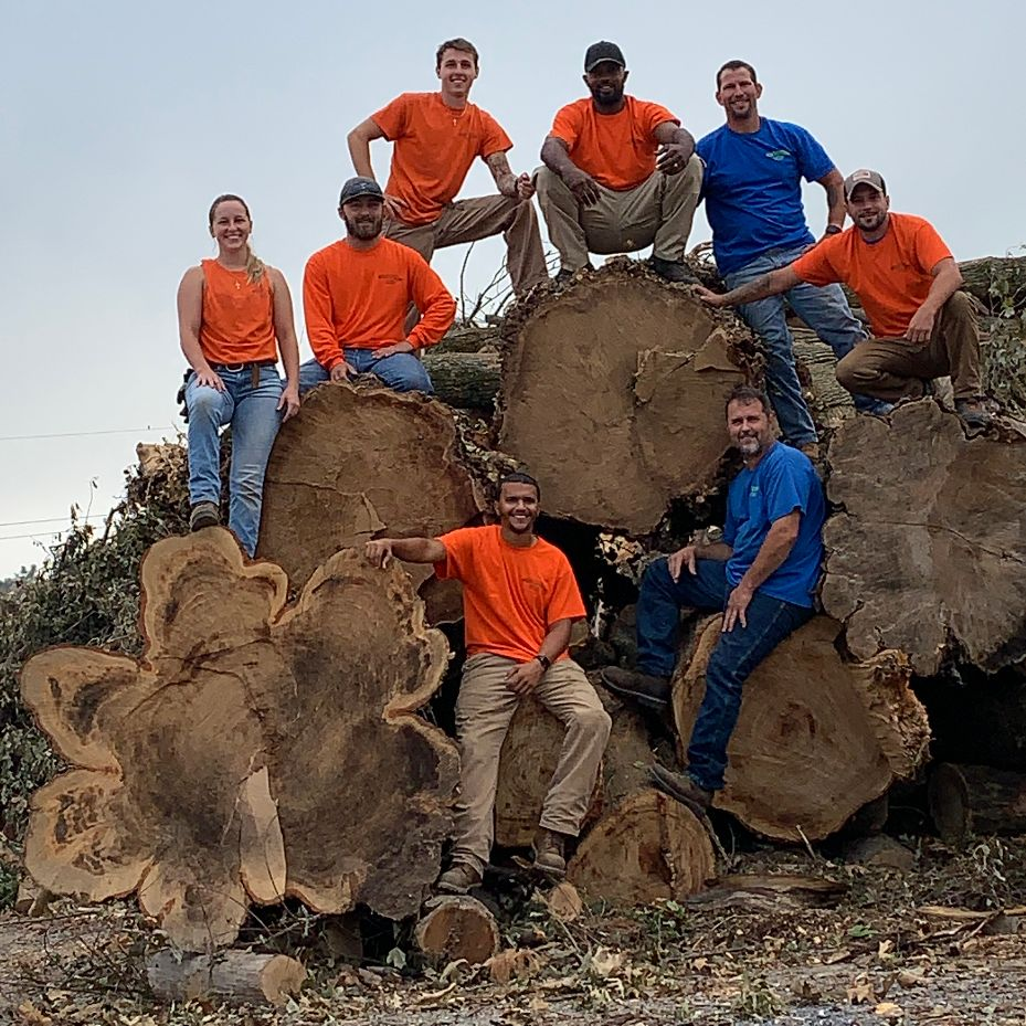 employees sitting on large cut tree logs