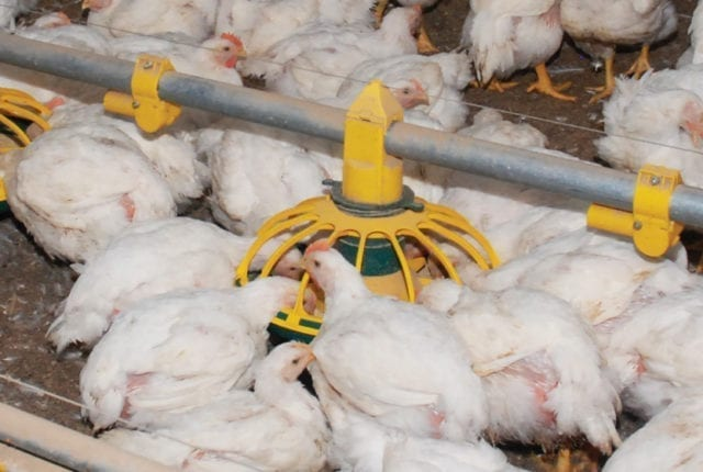 Website-Sliders-Poultry-Production-2-1345×560